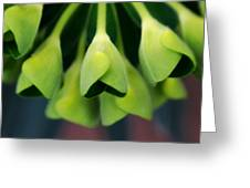 In The Green Greeting Card by Shannon Beck-Coatney