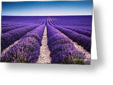 In The Lavender Greeting Card