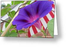 In The Morning - Summertime Greeting Card