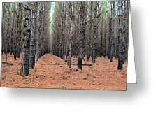 In The Pines Greeting Card by Bob Jackson