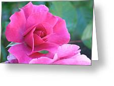 In The Pink Greeting Card by Rona Black