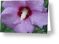 In The Rain Greeting Card by Annette Allman