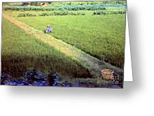 In The Rice Fields Greeting Card