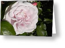 In The Rose Garden Greeting Card