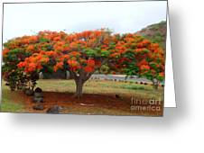In The Shade Of The Poincianas Greeting Card