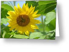 In The Sunflower Field Greeting Card