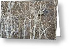 In The Sycamores Greeting Card