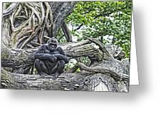 In The Treetop Greeting Card
