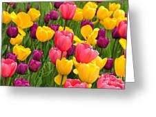 In The Tulip Garden Greeting Card