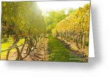 In The Vineyard Greeting Card by Diane Diederich