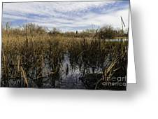 In The Weeds Greeting Card by David Taylor