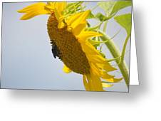 In The Wind - Sunflower Greeting Card