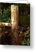 In The Woods By The River Greeting Card