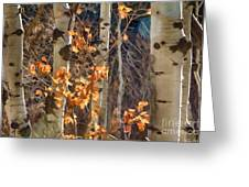 In The Woods V6 Greeting Card