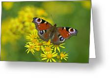 Inachis Io Butterfly On The Yellow Flowers Greeting Card
