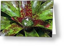 Inca Bromeliad Detail Greeting Card