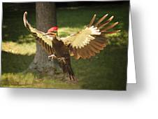 Incoming Pileated Greeting Card
