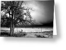 Incoming Storm Greeting Card by Cat Connor
