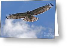 Incomming Redtail. Greeting Card