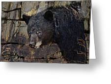 Inconspicuous Bear Greeting Card