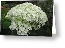 Incrediball Hydrangea Greeting Card