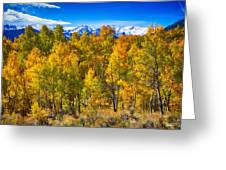 Independence Pass Autumn Colors Greeting Card