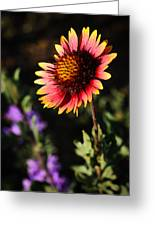 Indian Blanket Greeting Card by Thomas Pettengill