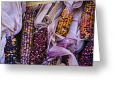 Indian Corn Harvest Greeting Card