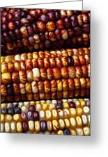 Indian Corn Harvest Time Greeting Card