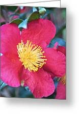 Indian Hawthorne Greeting Card