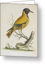Indian Icterus Greeting Card