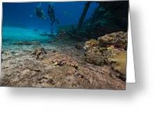Indian Ocean Crocodilefish Papilloculiceps Longiceps In The Red Sea. Greeting Card