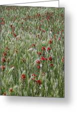 Indian Paintbrush And Foxtail Barley Greeting Card