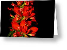 Indian Paintbrushs For Mom Greeting Card