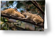 Indian Palm Squirrel Greeting Card