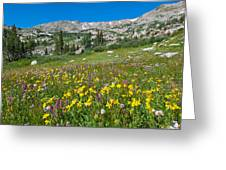 Indian Peaks Wildflower Meadow Greeting Card