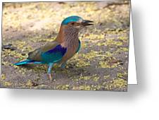 Indian Roller Greeting Card