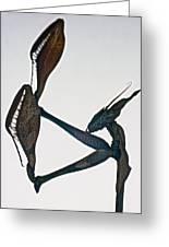 Indian Rose Mantis Gonglus Gongylodes Wondering Violin Mantis  1 Of 3 Greeting Card