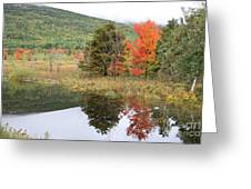 Indian Summer Acadia Park Greeting Card