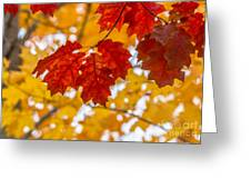 Indian Summer Trees Greeting Card