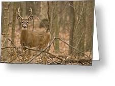 Indiana Buck  Greeting Card