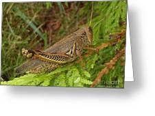 Indiana Grasshopper Greeting Card