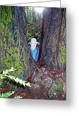 Indiana Jones In Armstrong Redwoods State Preserve Near Guerneville-ca Greeting Card