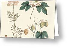 Indigenous Spice Plants Greeting Card