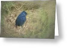 Indigo Blue Greeting Card