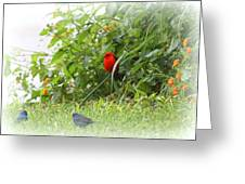 Indigo Bunting And Scarlet Tanager 2 Greeting Card