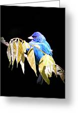 Indigo Bunting - Img 423-008 Greeting Card