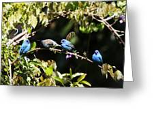 Indigo Bunting - Img 431-013 Greeting Card