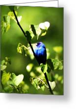 Indigo Bunting - Img_459-002 Greeting Card