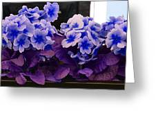 Indigo Flowers Greeting Card